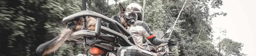 woman-and-german-shepherd-dog-wearing-go