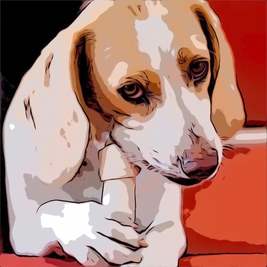 Comic cartoon dog chews on bone