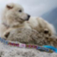 Colorful handmade dog leash lying on rock beside white furry dog