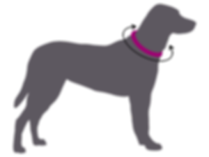 Silhouette of grey dog wearing pink collar with black measurement arrows to determine collar size