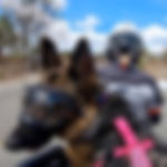 German Shepherd wearing Rex Spec dog goggles rides on woman's motorcycle