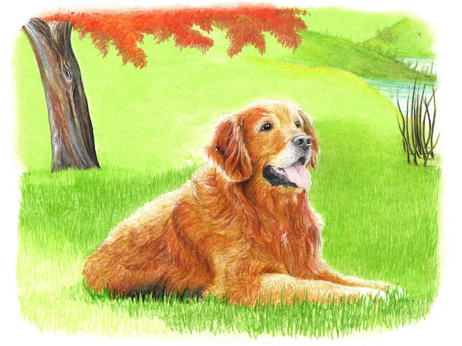 Drawing of a golden retriever dog under shade of fall tree