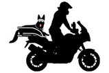 Motorcyclist riding adventure motorcycle with large dog on motorcycle dog carrier