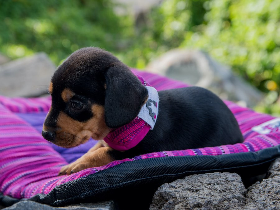 brown and black puppy on handmade dog travel bed on rocks