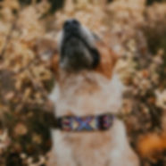 Beige and khaki dog wearing colorful handmade macrame collar surrounded by autumn leaves