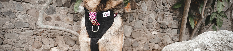 German-Shepherd-wears-K9-Moto-Harness-fo
