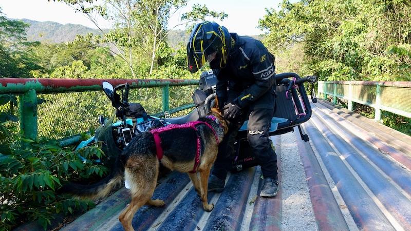 Man stands beside motorcycle crashed on metal bridge with German Shepherd dog beside motorcycle dog carrier