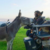 Donkey sniffs dog on motorcycle