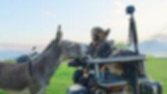 Donkey sniffs a German Shepherd on motorcycle dog carrier