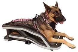 Happy German Shepherd in custom build motorcycle dog carrier