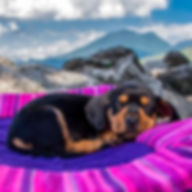 Small black and brown puppy sleeps on soft, handwoven dog travel bed with rocks and mountains in background