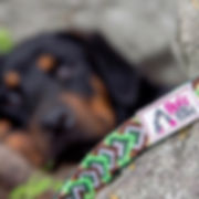 Green macrame reflective dog leash with PVC label on rock with black Doberman in background