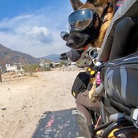 German Shepherd on motorcycle dog carrier riding off-road