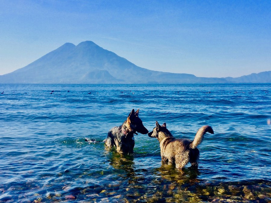 Two dogs meet to sniff each other in a lake beside volcanoes