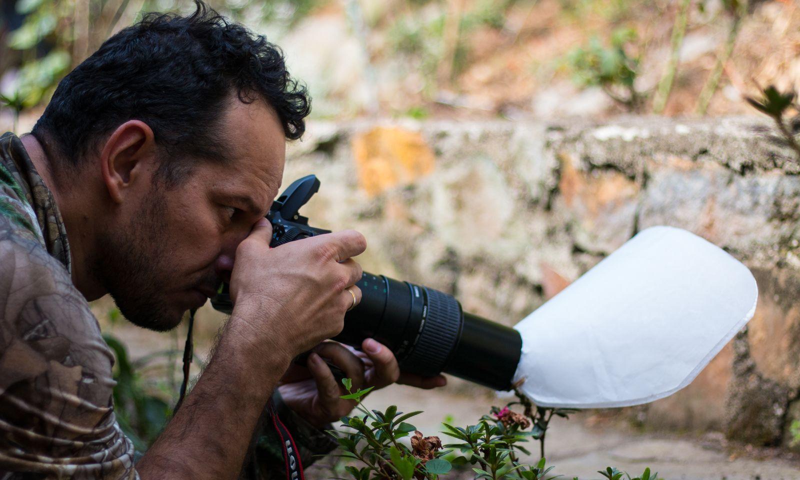 Fotografia de insectos en el jardín