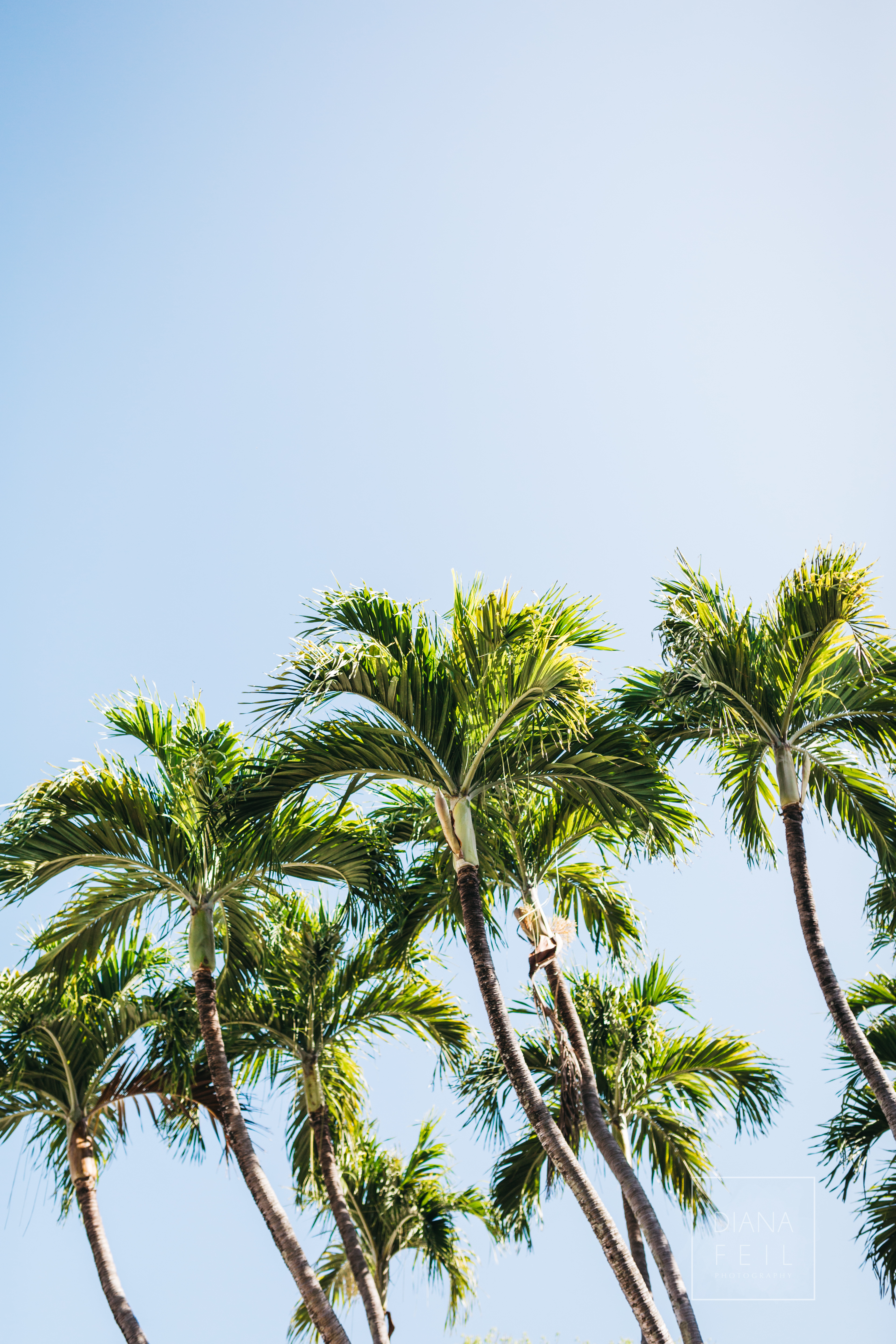 palm trees of key west.