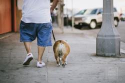 like owner, like dog.