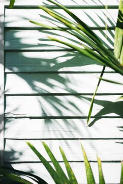 shadows, lines & wood.