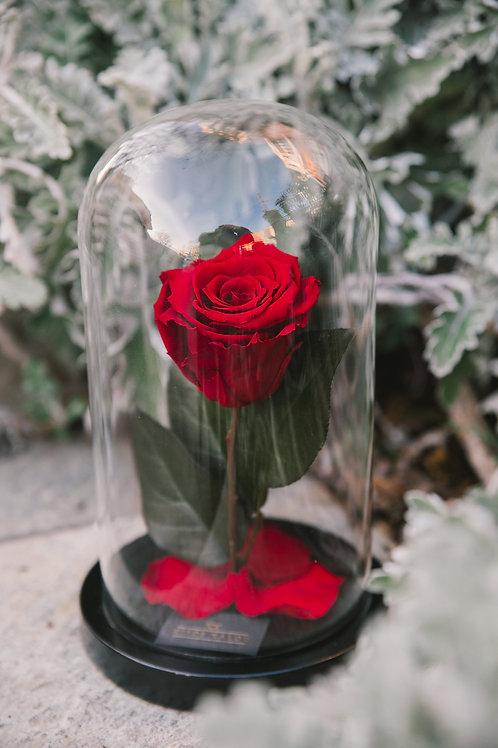 Πολυτελή γυάλα με 1 Eternity Rose