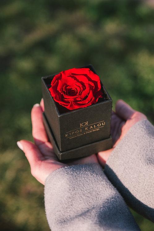 Eternity Rose σε μαύρο κουτί