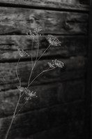 Barn shoot-23.JPG