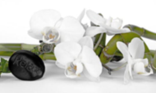 bamboo_orchid.jpg