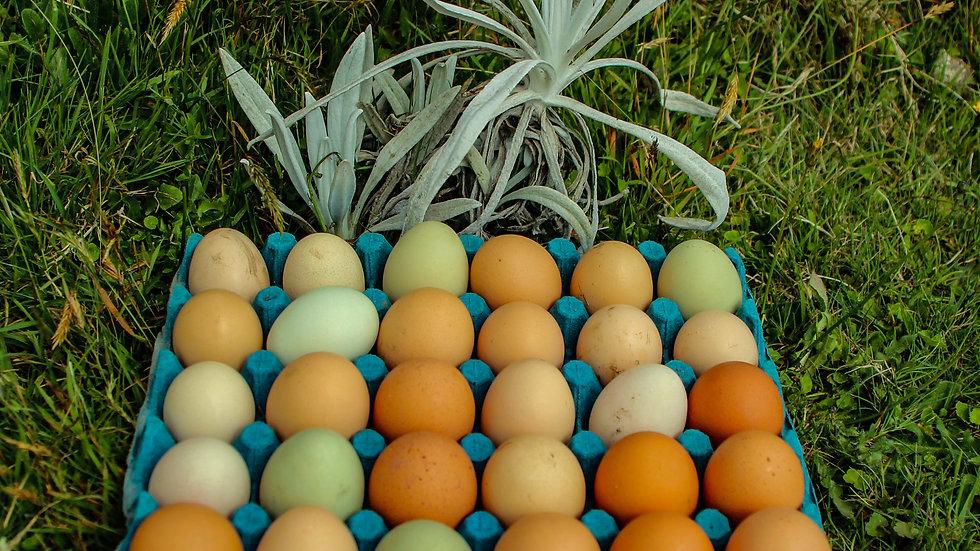 Huevos Criollos - Cubeta X 30