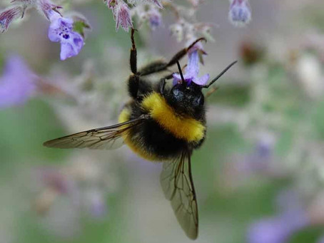 California Bee Spirit Journey