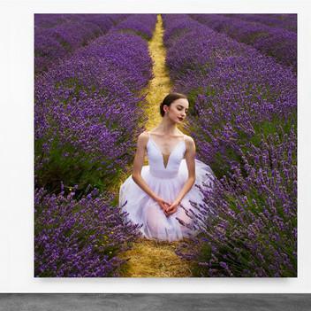 Lavender Fields- UK