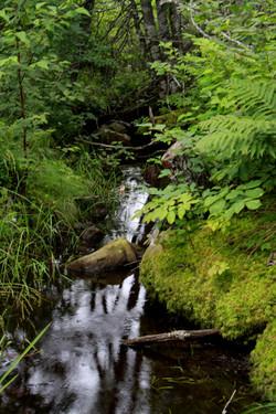 Running creeks