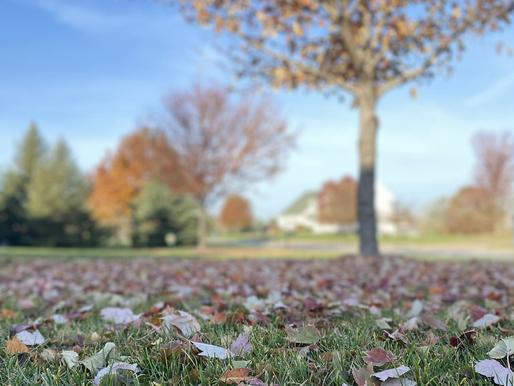 What Autumn Brings