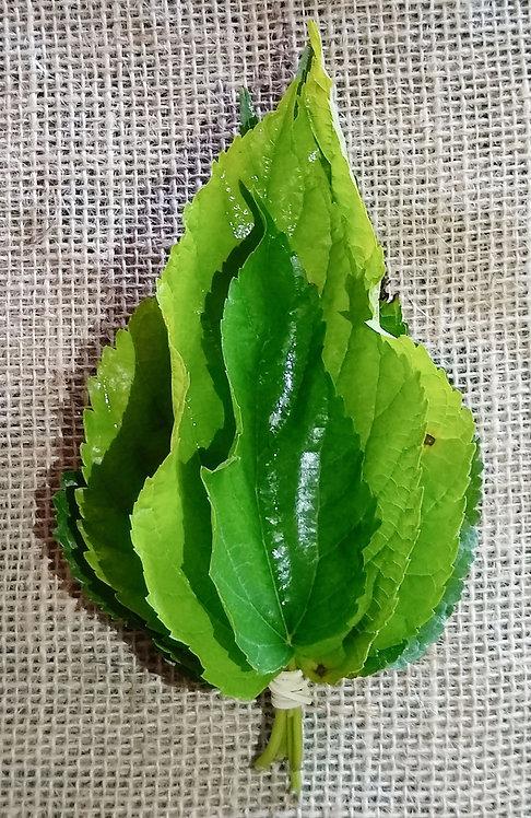 Folhas de amora orgânica (maço)