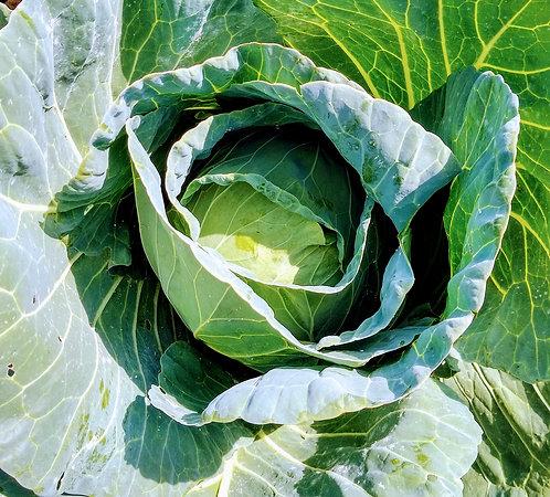 Repolho verde orgânico (unidade)