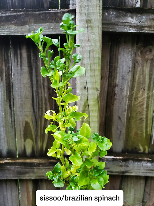 Ground Cover: Leafy Greens