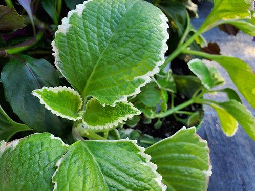 April 10 Herbs