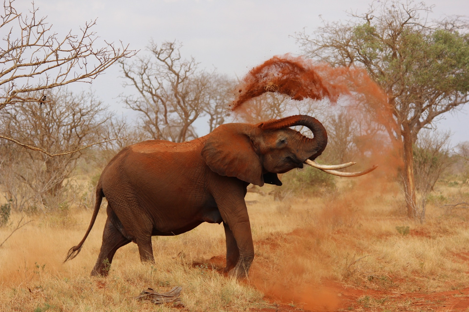 africa-animal-elephant-70080