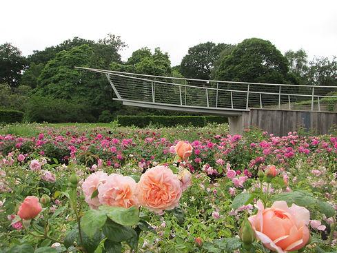Savill Garden, Rose Garden.JPG