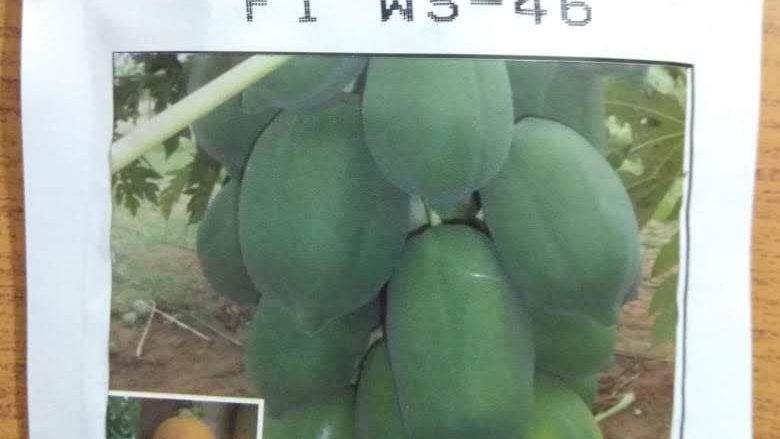 బొప్పాయి సీడ్ ,welcome crop science