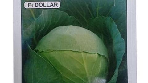 క్యాబేజీ  సీడ్   ,welcome crop science