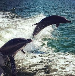 dolphins jump bo.jpg