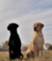 Surefire Gun Dogs, gun dog trainer in omaha nebraska, dog training for upland game, positive gun dog training, omaha nebraska hunting dog, hunt dog training omaha