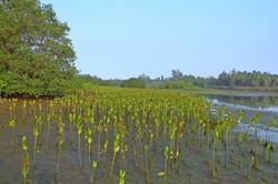 mangrove-249920_1280