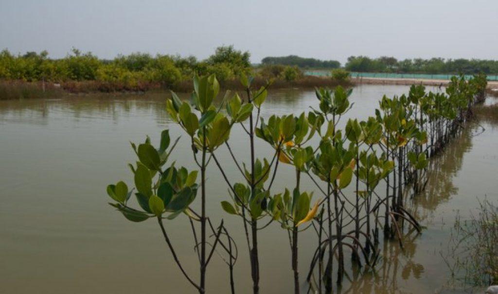Mangrove-indonesia-CIFOR-2zrbr960nr4ay7316mv37k