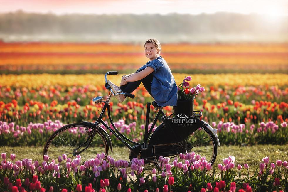 tulip farm photo
