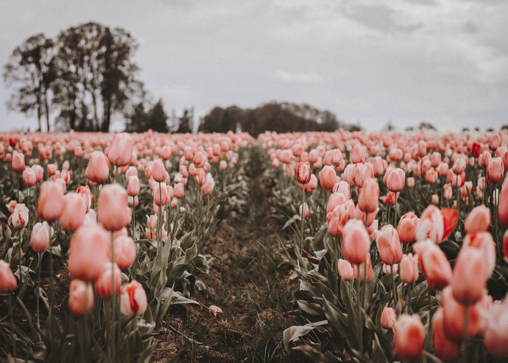 April 2018 | Woodburn, Oregon