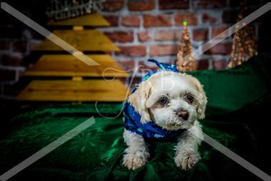 Rosemary Pups-135.jpg
