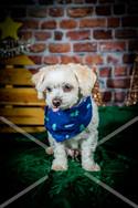 Rosemary Pups-129.jpg