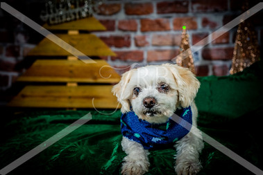 Rosemary Pups-134.jpg