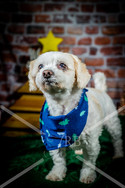 Rosemary Pups-128.jpg