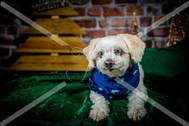 Rosemary Pups-133.jpg